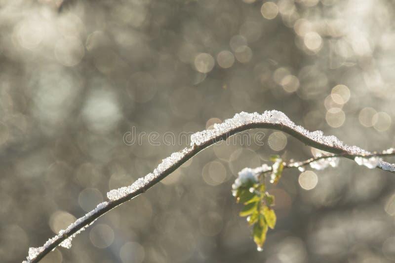 Nieve en una ramificación fotos de archivo libres de regalías