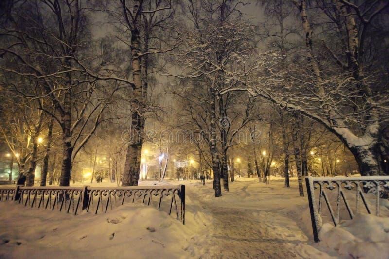 Nieve fría del paisaje del bosque del invierno foto de archivo libre de regalías