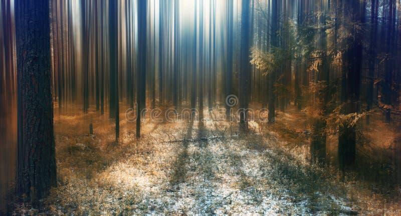 Nieve fría del paisaje del bosque del invierno imágenes de archivo libres de regalías