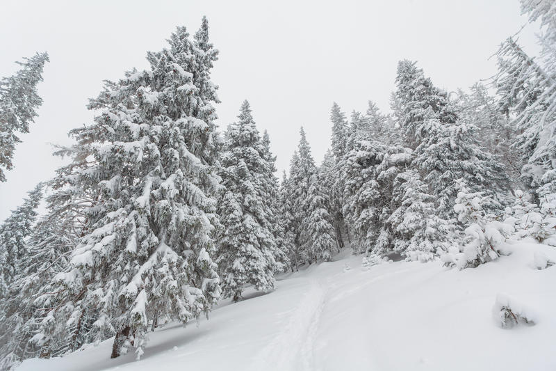 Nieve, invierno, paisaje, nevoso fotos de archivo