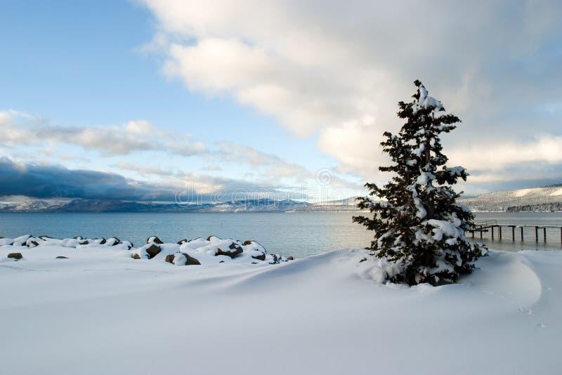 Nieve Lake Tahoe del árbol imagen de archivo