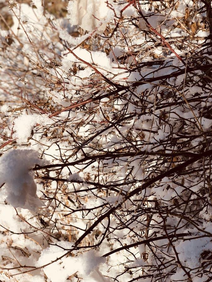 Nieve pegada entre las ramas foto de archivo
