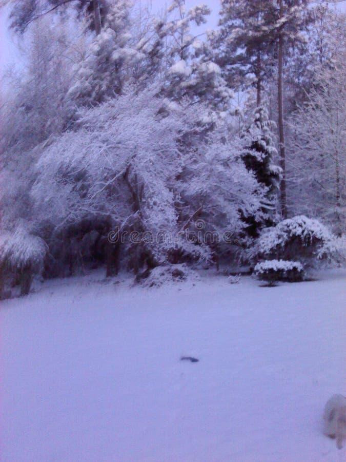 Nieve rara en Georgia en nuestro patio trasero foto de archivo
