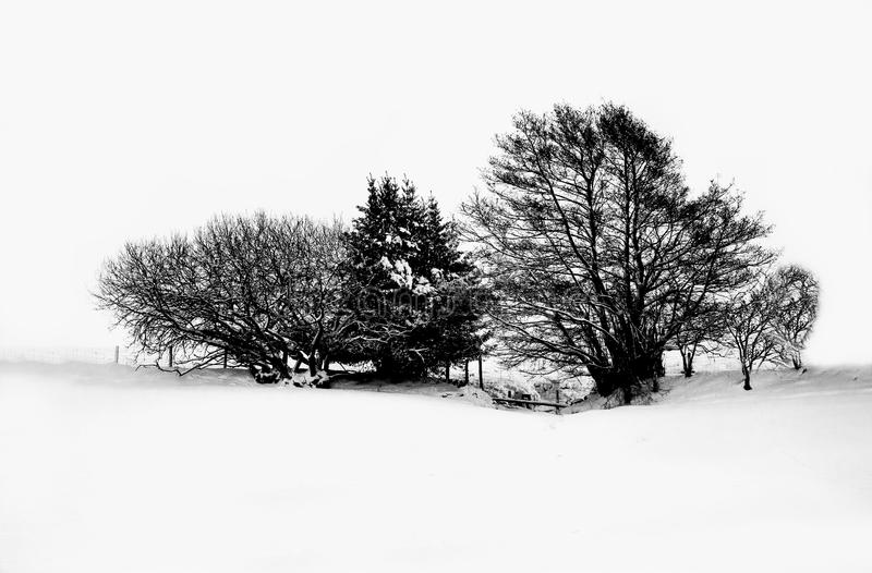 Nieve y árboles imagen de archivo libre de regalías