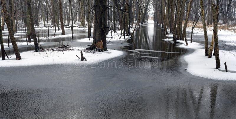 Nieve y hielo en el bosque foto de archivo libre de regalías