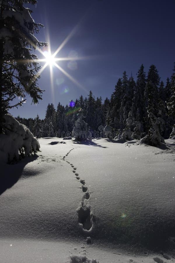 Nieve y huellas fotos de archivo libres de regalías