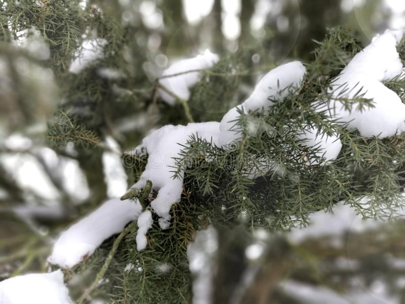 Nieve y perfección x27;s foto de archivo
