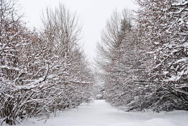 Nieves fotos de archivo