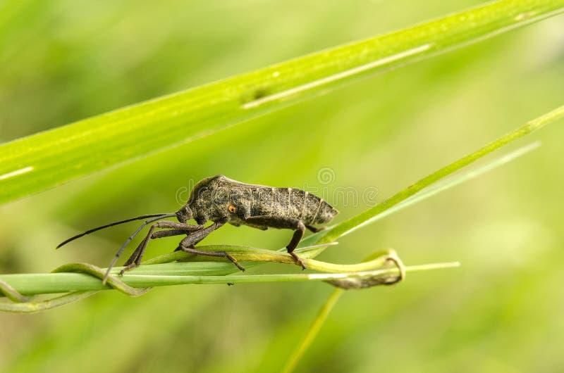 Niewiadomi insekty fotografia stock
