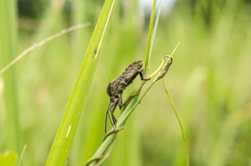 Niewiadomi insekty zdjęcie royalty free