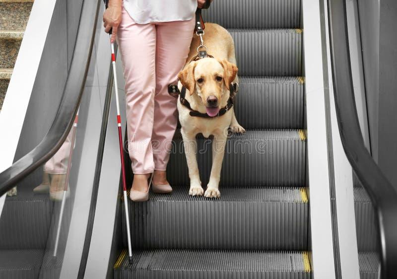 Niewidoma kobieta z przewdonika psem zdjęcie stock