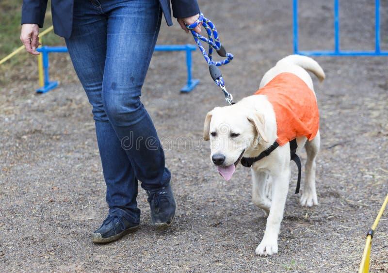 Niewidoma osoba z jej przewdonika psem zdjęcia stock
