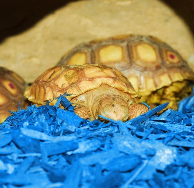 Niewidomy dziecko żółw snuggling z jego mamą zdjęcia royalty free