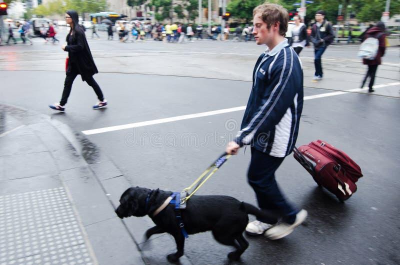 Niewidomy mężczyzna prowadzi jego przewdonika psem obraz royalty free
