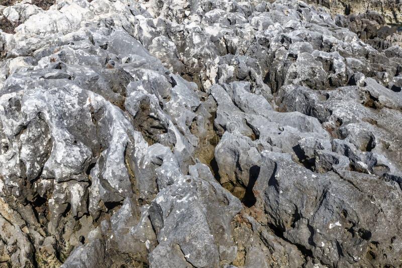 Niewygładzone wapnia morza skały obraz royalty free