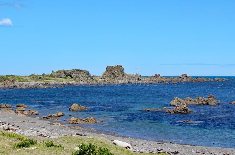 Niewygładzony skały jut w za spokojnym morzu przy opustoszałą plażą na Kucbarskiej cieśninie blisko Wellington, Nowa Zelandia obrazy royalty free