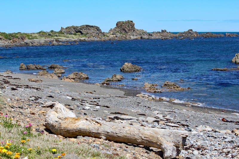 Niewygładzony skały jut w za spokojnym morzu przy opustoszałą plażą na Kucbarskiej cieśninie blisko Wellington, Nowa Zelandia zdjęcie stock
