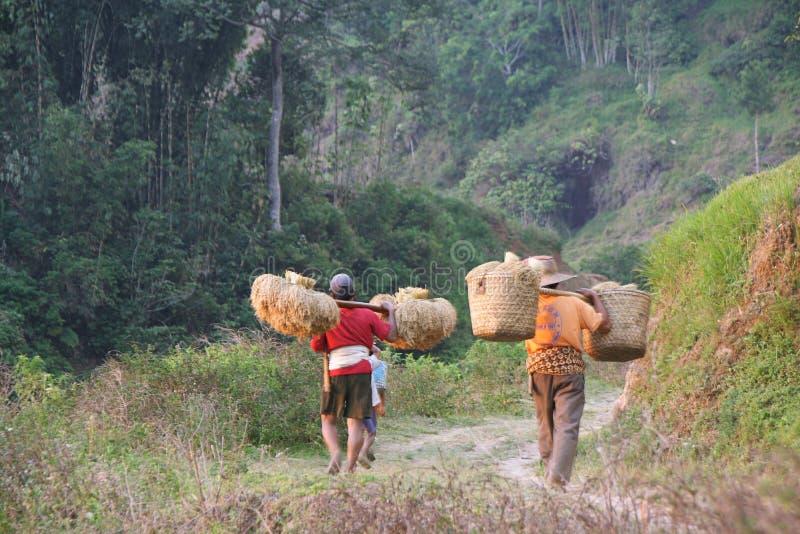 Niezidentyfikowani mężczyzna ładuje suchych ryż obrazy stock