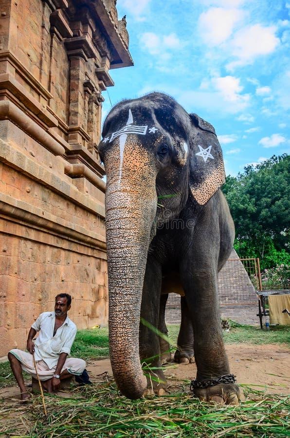 Niezidentyfikowany mężczyzna siedzi obok słonia fotografia royalty free