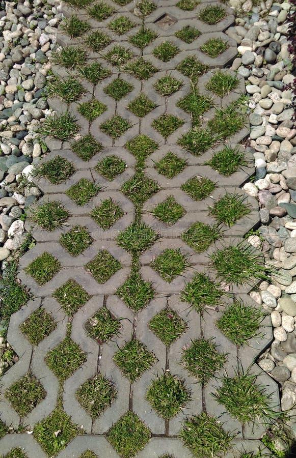 Niezwykła ścieżka zielona trawa w parku fotografia stock