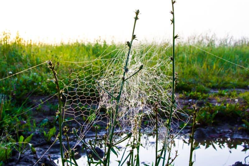 Niezwykła pająka ` s sieć w polu w wczesnym poranku obrazy royalty free