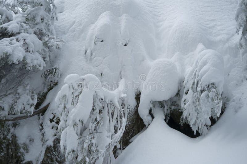 Niezwykła twarz w śniegu zakrywał drzewa w zimy scenie na góry Seymour ` s psa Halnej podwyżce zdjęcie stock