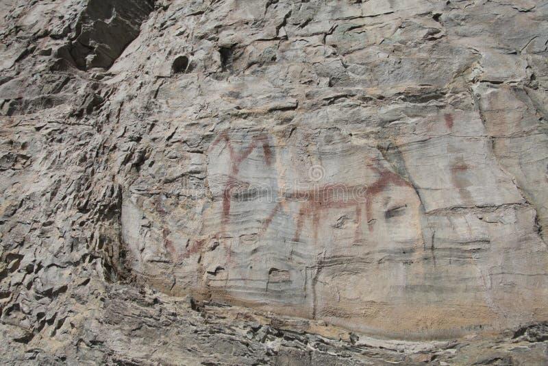 Niezwykła zwierzęca rodowity amerykanin skały sztuka w Północno-zachodni Montana fotografia stock