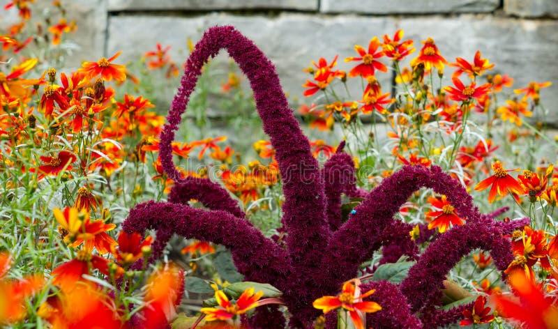 Niezwykły purpura kwiat w ogródzie zdjęcia stock