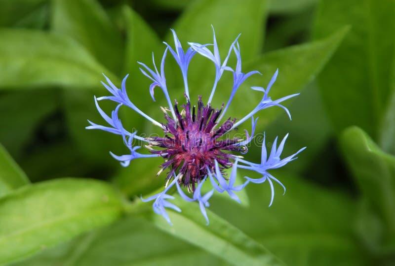 Niezwykłe kwiat