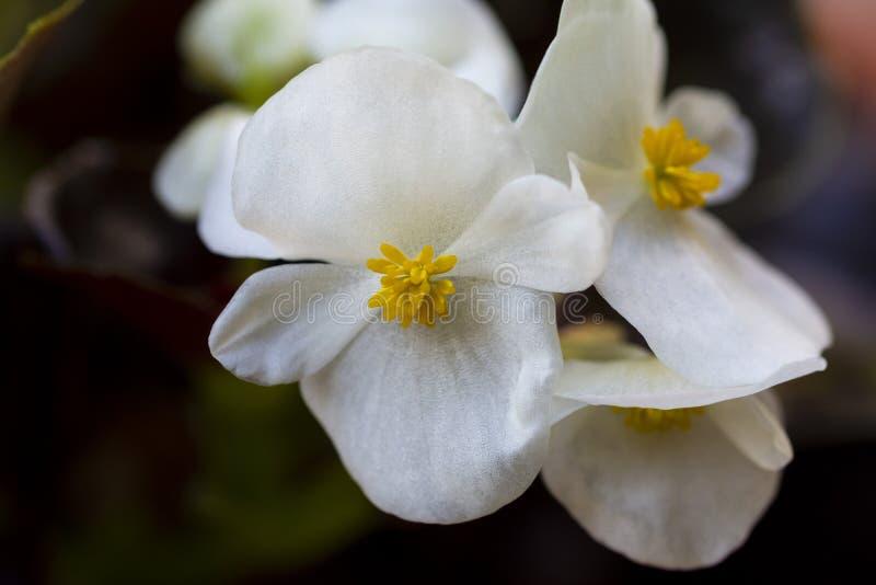 Niezwykle piękna wiązka biali kwiaty obrazy stock
