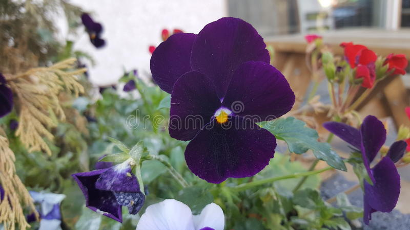 Niezwykli kwiaty obraz stock