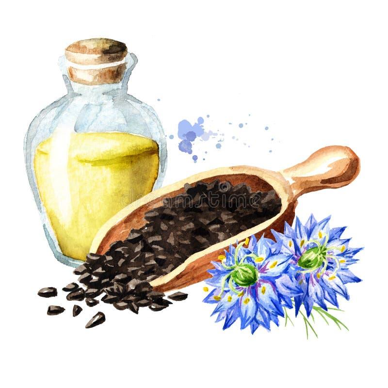 Nigella sativa o flor de hinojo, flor de nuez moscada moscada, coriandro romano, comino negro, s?samo negro, alcaravea blackseed, stock de ilustración