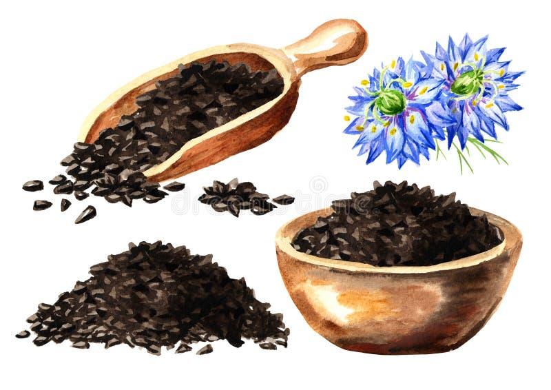 Nigella sativa o flor de hinojo, flor de nuez moscada moscada, coriandro romano, comino negro, s?samo negro, alcaravea blackseed, ilustración del vector