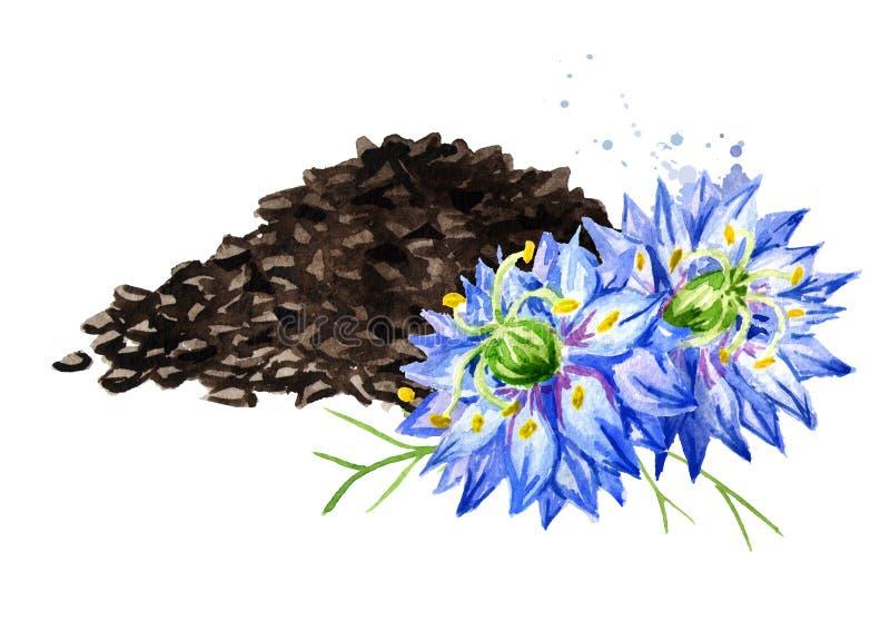 Nigella Sativa oder Fenchelblume, Muskatnussblume, römischer Koriander, Schwarzkümmel, schwarzer indischer Sesam, blackseed, Schw lizenzfreie abbildung