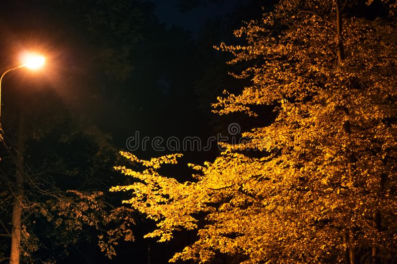 Night autumn Park with a lantern. The frightening darkness of the autumn Park royalty free stock photography