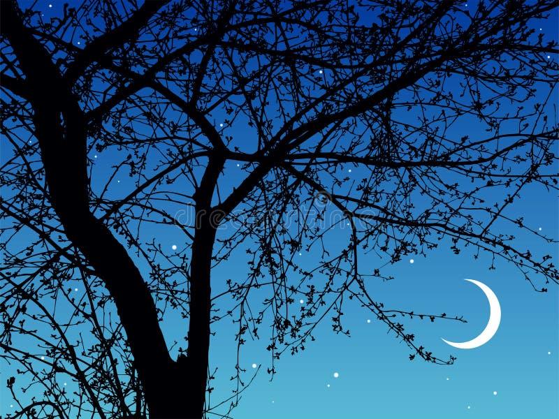 Night branches vector illustration