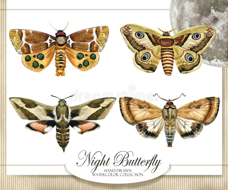 night butterfly watercolor hand drawn illustration stock illustration