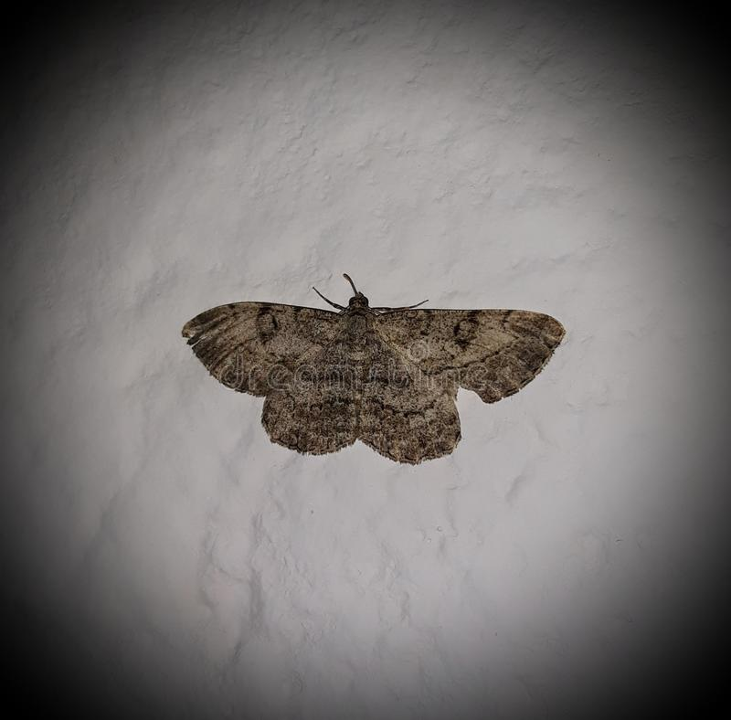 Night butterfly stock photography