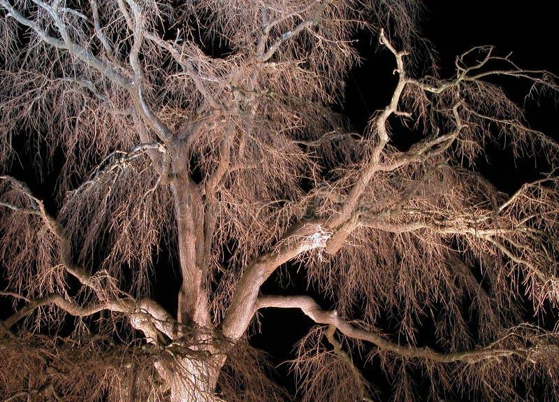 Night cherry tree-detail stock photos