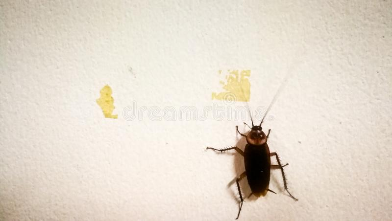 In the night, cockroaches like to go out to eat. royalty free stock photos
