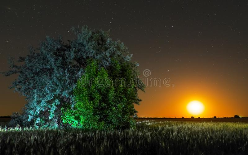 Night in countryside. Alone tree at field royalty free stock photography