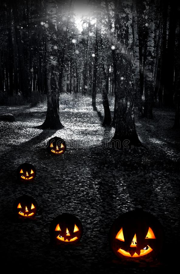 Night dark forest and pumpkins on a holiday halloween stock image