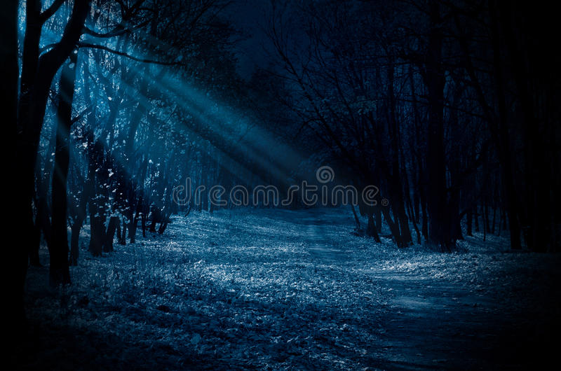 Night forest. With moonlight beams stock photography