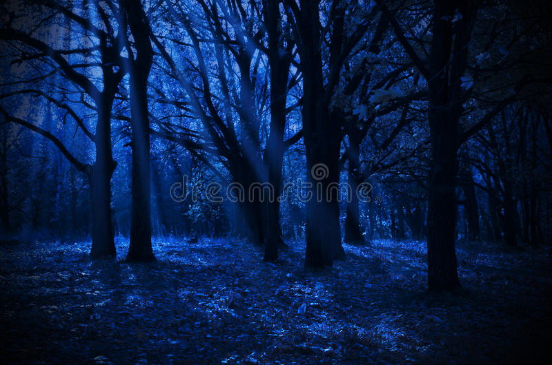 Night forest. With moonlight rays royalty free stock photo