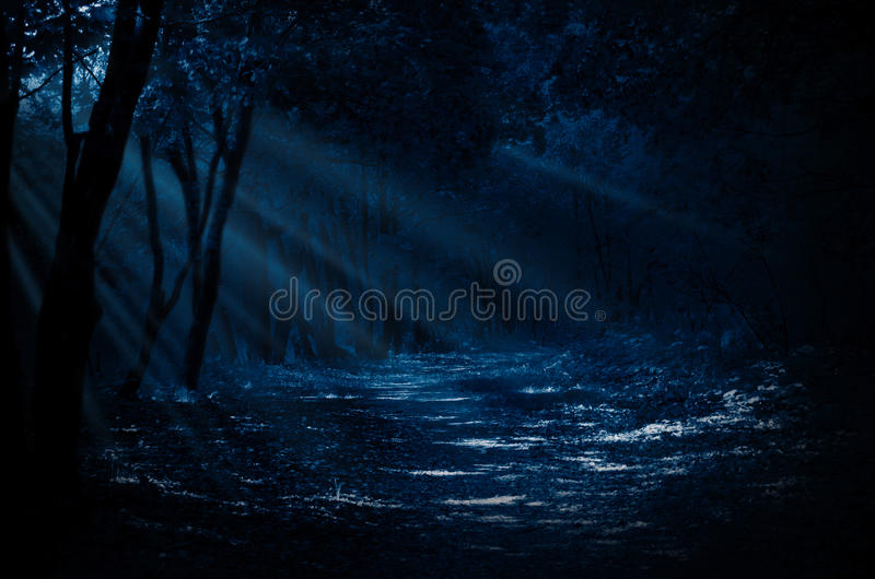 Night forest. With moonlight rays royalty free stock photos