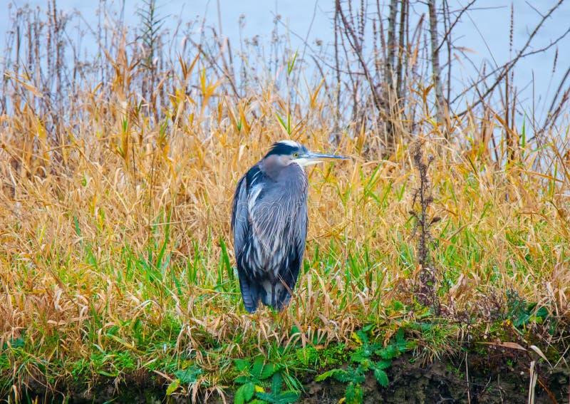 Night heron sitting on riverbank. royalty free stock photography
