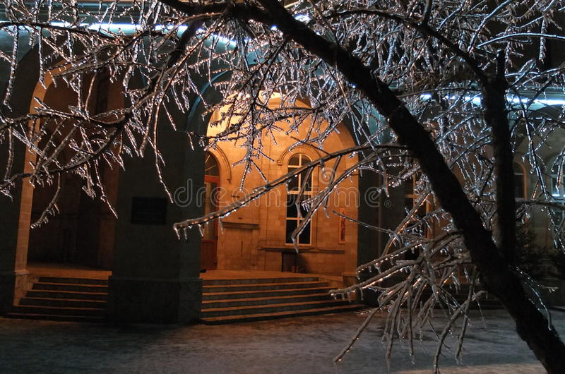 Night and ice on trees royalty free stock photo