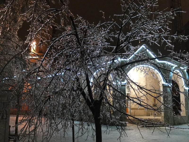 Night and ice on trees royalty free stock photography
