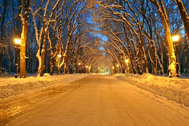 Night illumination on the winter alley, power, royalty free stock photography