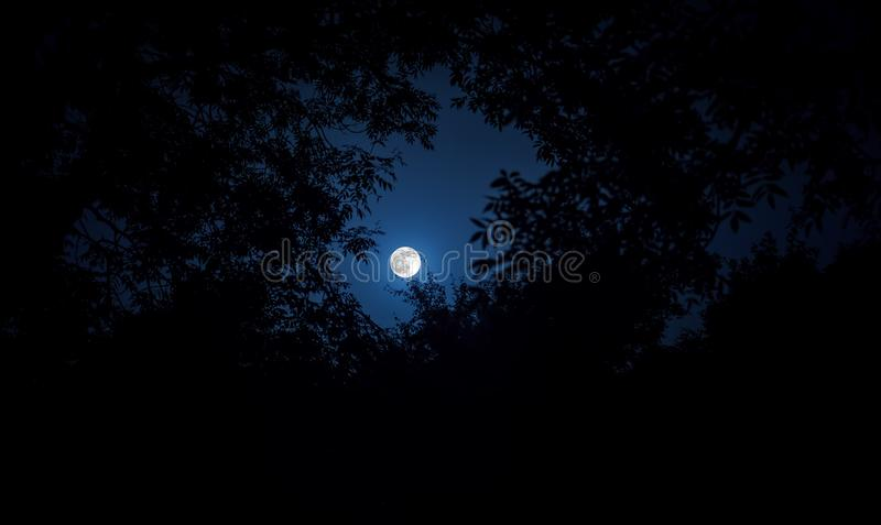 Night landscape of sky and super moon with bright moonlight behind silhouette of tree branch. Serenity nature background. Outdoors royalty free stock image